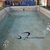 5 swimming restoration RSLSlogo