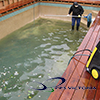 4 pool restoration activities AVSlogo